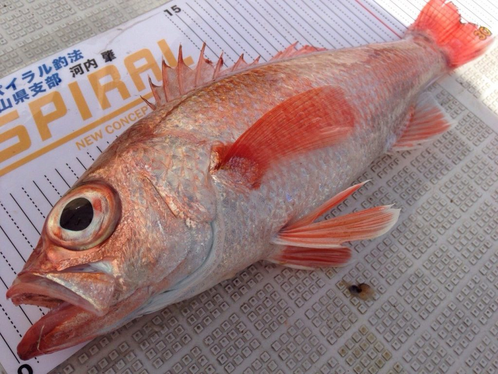今はのどぐろ、昔は魚神。