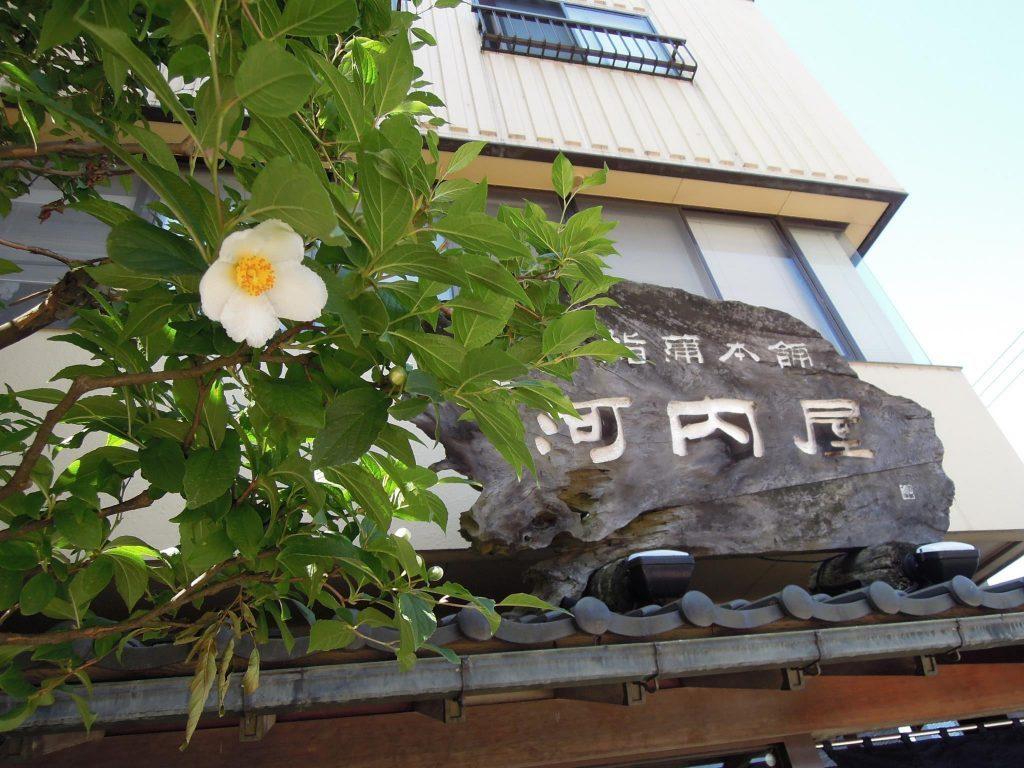 本店夏の風物詩〝夏椿〟が咲き始めました