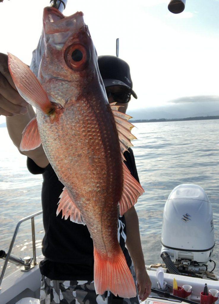 最近は赤い魚に凝っています!